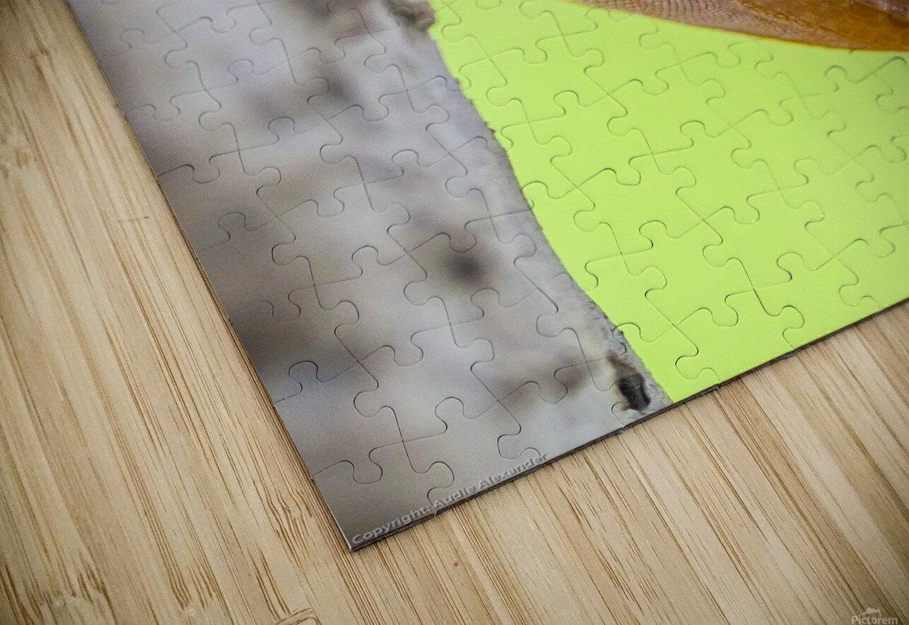 IMG_1264 HD Sublimation Metal print