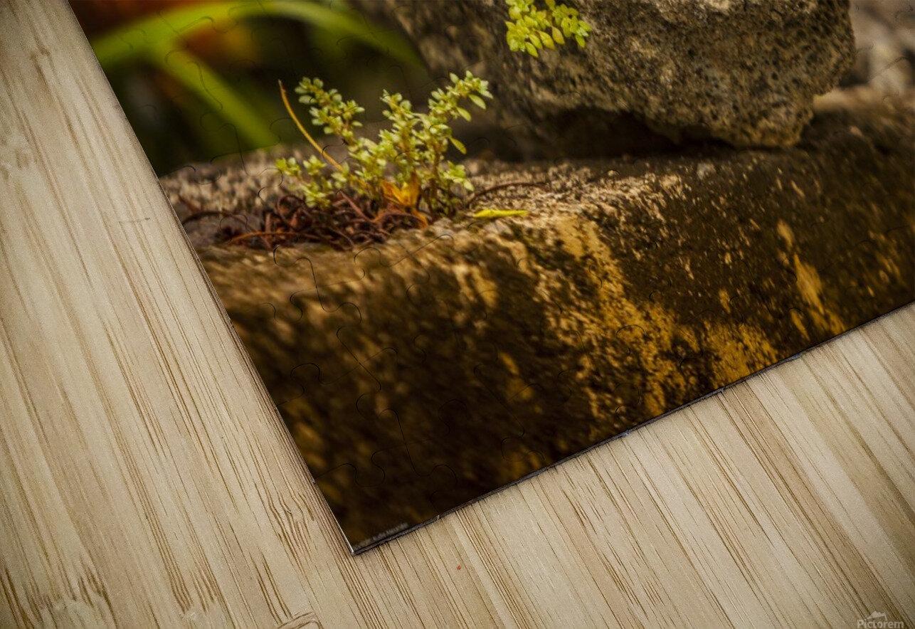 IMG_1288 HD Sublimation Metal print