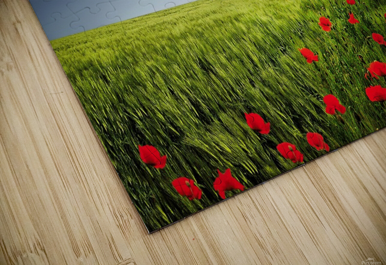 Lone tree a poppies field HD Sublimation Metal print