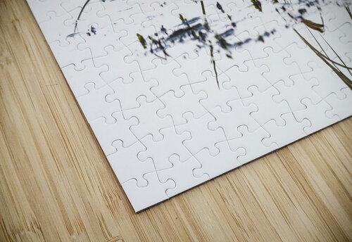 Grass grows in Coffenbury Lake; Hammond, Oregon, United States of America jigsaw puzzle