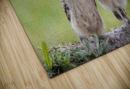 Friends jigsaw puzzle