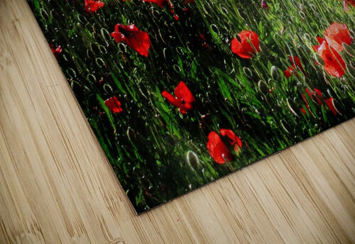 Rolling Fields with Poppies jigsaw puzzle