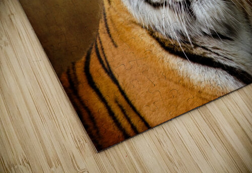 Bengal Tiger jigsaw puzzle