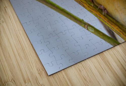 Cardinal ap 1822 jigsaw puzzle