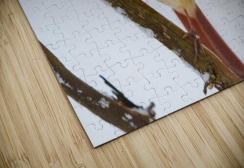 Cardinal ap 1729 jigsaw puzzle
