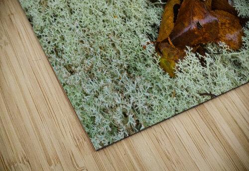 Leaves  N  Lichen ap 1553 jigsaw puzzle