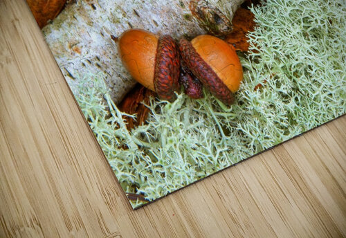 Pin Oak Leaf ap 1557 jigsaw puzzle
