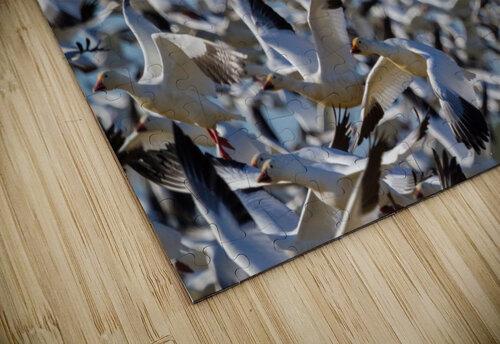 Snow Geese ap 1855 jigsaw puzzle