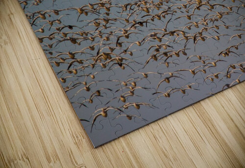 Snow Geese ap 1863 jigsaw puzzle
