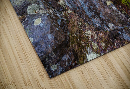 Moss   Lichen ap 2294 jigsaw puzzle