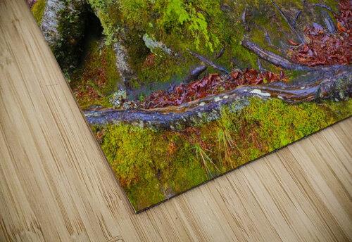 Moss   Lichen ap 2196 jigsaw puzzle