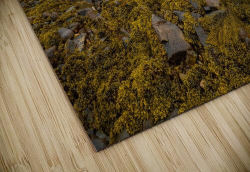 Low Tide ap 2271 jigsaw puzzle