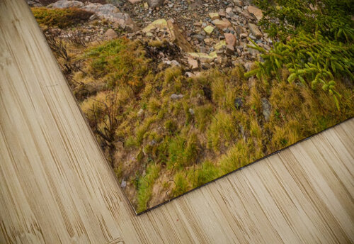 Lone Pine ap 2284 jigsaw puzzle