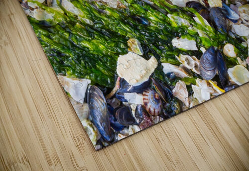 Barnacle Shells ap 1528 jigsaw puzzle