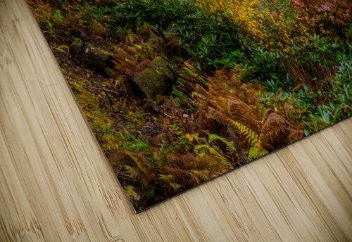 Blackwater Falls apmi 1904 jigsaw puzzle