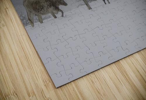 Longhorns jigsaw puzzle