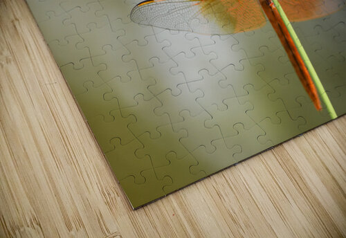 PEEK-A-BOO  Collection 1-4 jigsaw puzzle