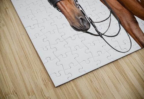 Bay Horse Portrait jigsaw puzzle