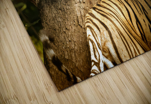 Indian Tiger jigsaw puzzle