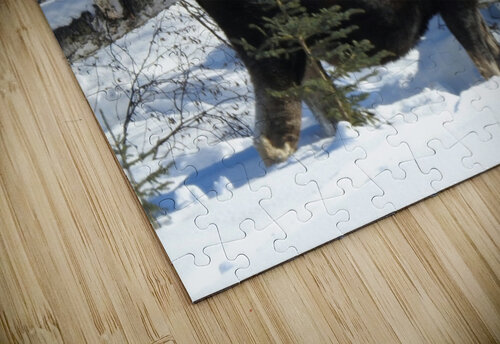 Hungry Moose jigsaw puzzle