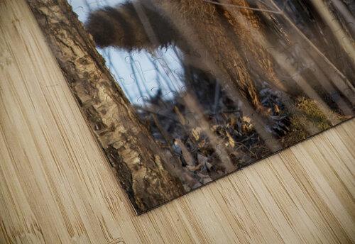 Racoon peeking through twigs jigsaw puzzle