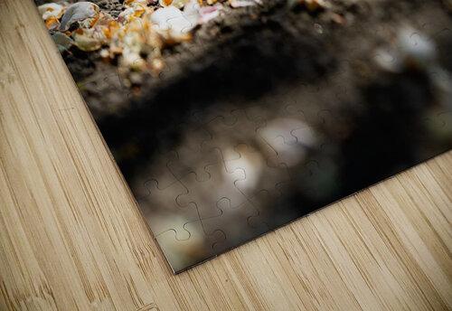Confettis sur bitume puzzle