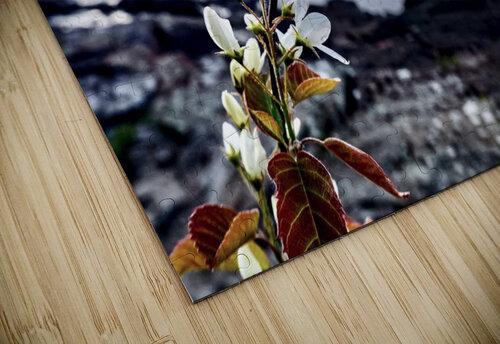 Flower on the Shoreline jigsaw puzzle