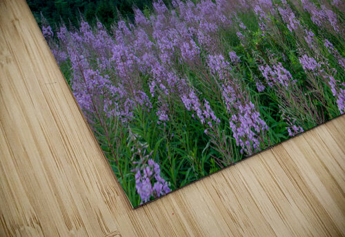 Fireweed at La Grand Falaise jigsaw puzzle