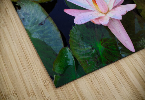 Water Lilies jigsaw puzzle