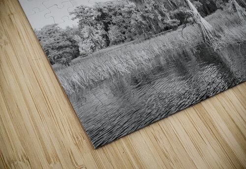 Blue cypress trees horizontal jigsaw puzzle