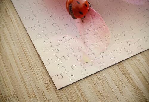 Ladybirds on pink hydrangea. jigsaw puzzle