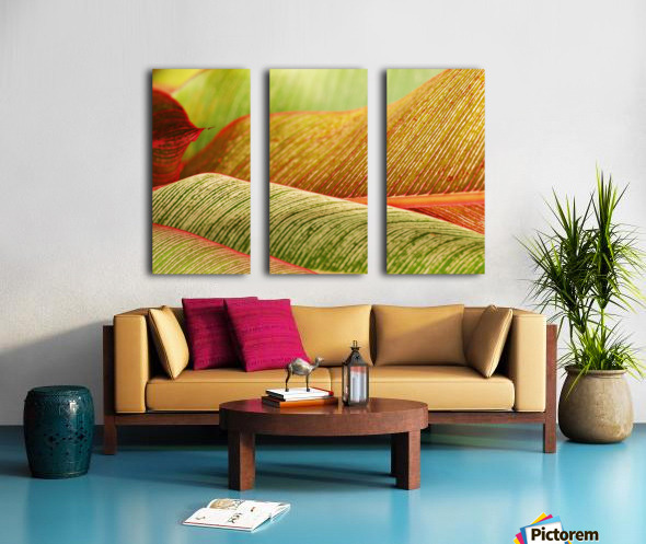 Indonesia, Bali, Close-Up Of Tropical Plants, Leaves Split Canvas print
