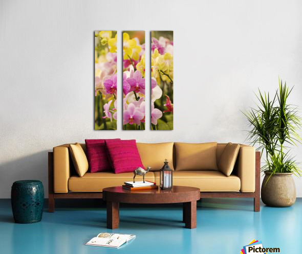 Hawaii, Field Of Pink And Yellow Orchids. Split Canvas print