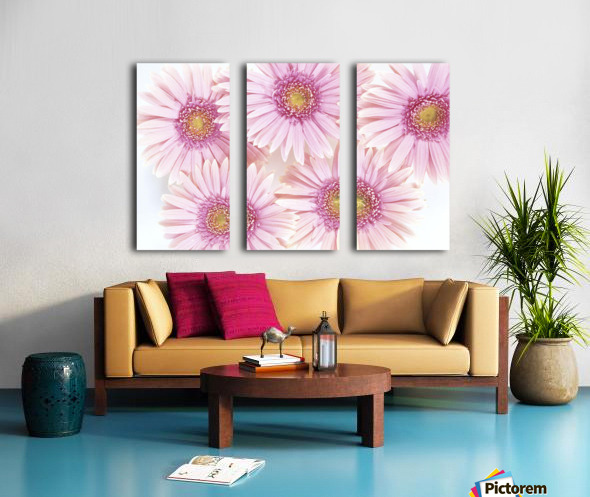 Close-Up Of Pink Daisies Set Together On White Background Studio Shot Split Canvas print