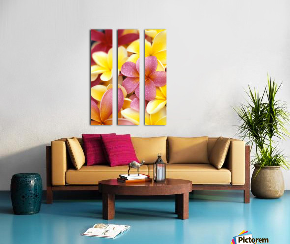 Studio Shot Of Yellow And Two Pink Plumeria Flowers, Water Drops On Petals Split Canvas print