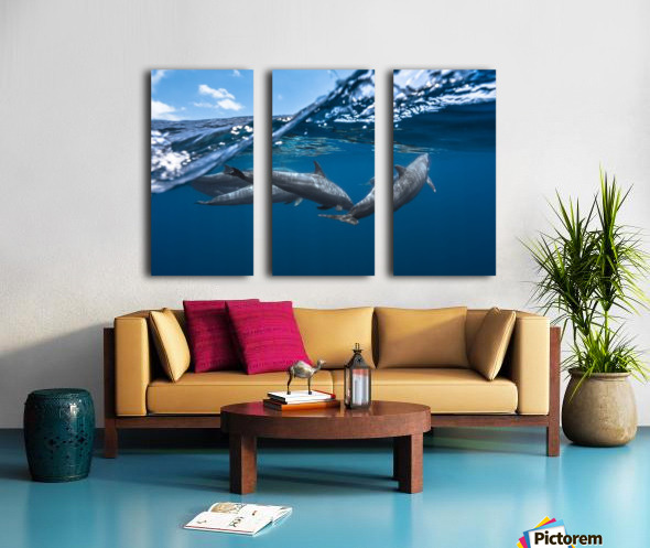 Dolphins Split Canvas print