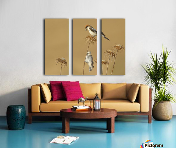 Woodchat Shrike Split Canvas print