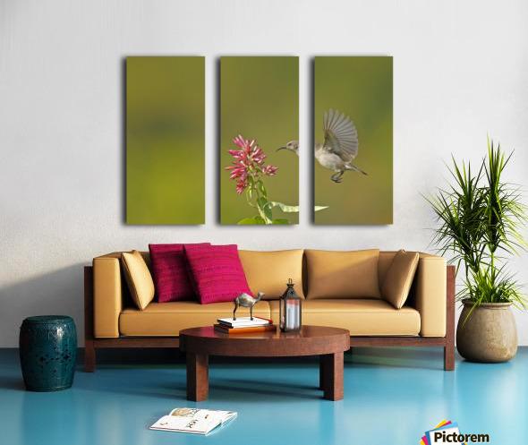 Sunbird Split Canvas print