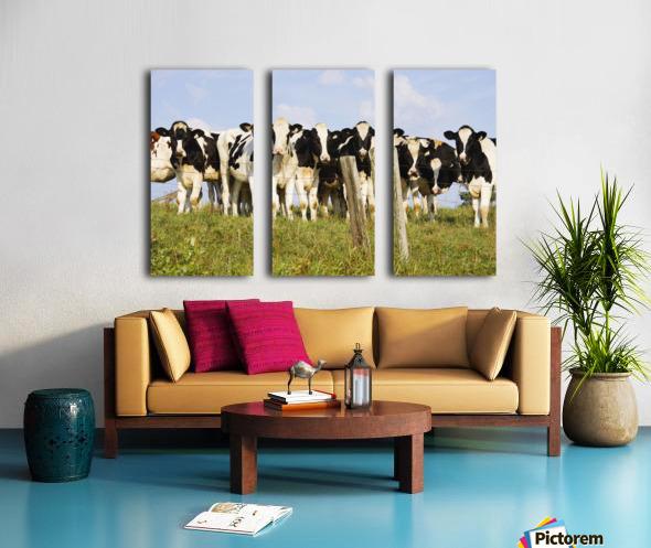 View Of Cows, Bas-Saint-Laurent Region, Quebec, Canada Split Canvas print