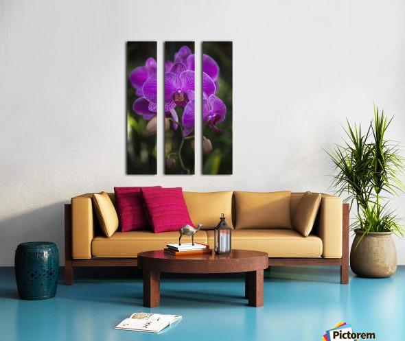 Phalaenopsis orchids in bloom; Kailua, Island of Hawaii, Hawaii, United States of America Split Canvas print