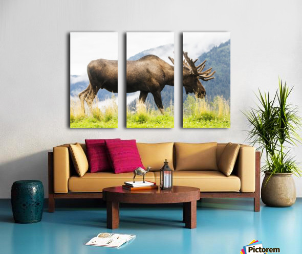 Bull moose (alces alces) with antlers in velvet, captive in Alaska Wildlife Conservation Center, South-central Alaska; Portage, Alaska, United States of America Split Canvas print
