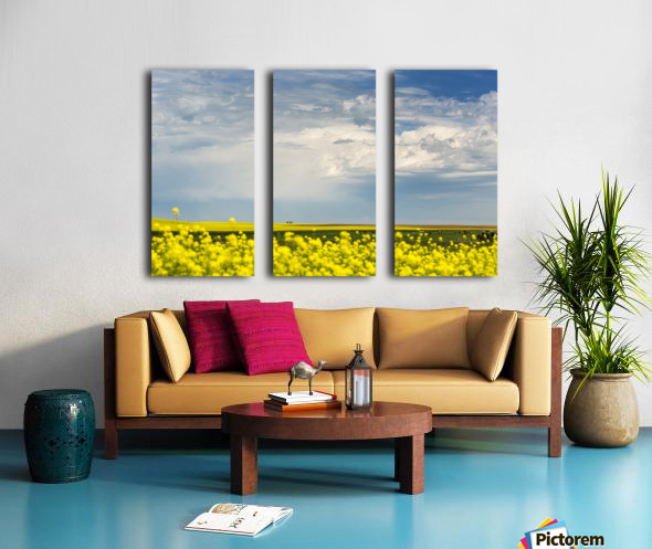 Flowering canola field with dark storm clouds and cattle grazing; Nanton, Alberta, Canada Split Canvas print