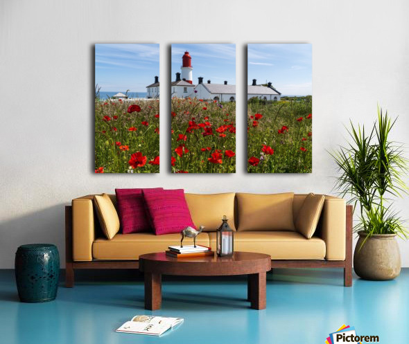 Souter Lighthouse with a field of red poppies in the foreground; South Shields, Tyne and Wear, England Split Canvas print