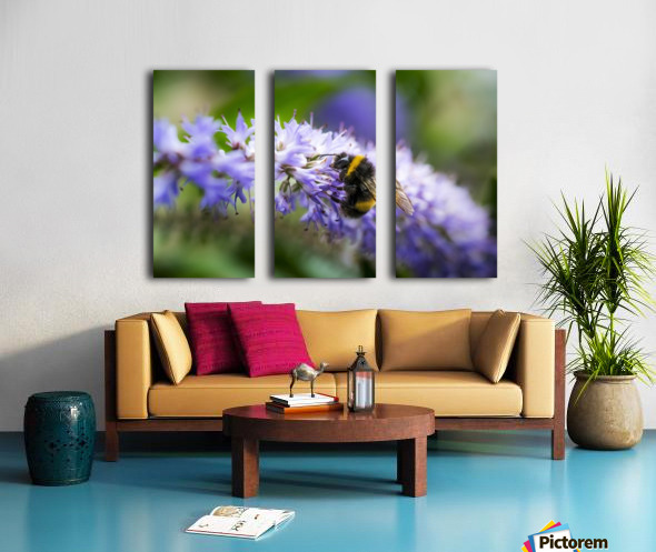 A bee resting on a purple flower; South Shields, Tyne and Wear, England Split Canvas print