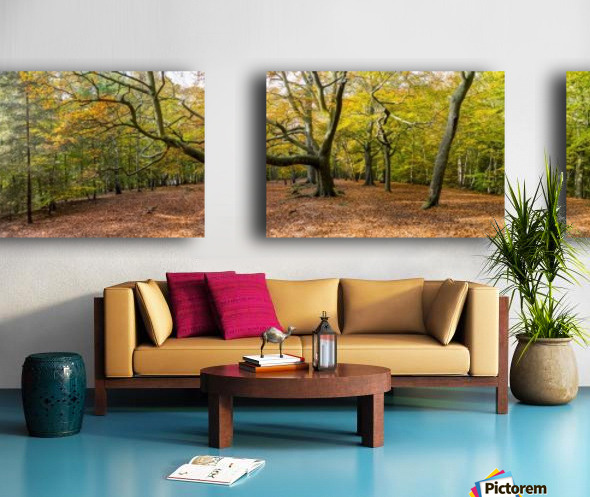 Panorama of a forest in autumn colours; Surrey, England Split Canvas print