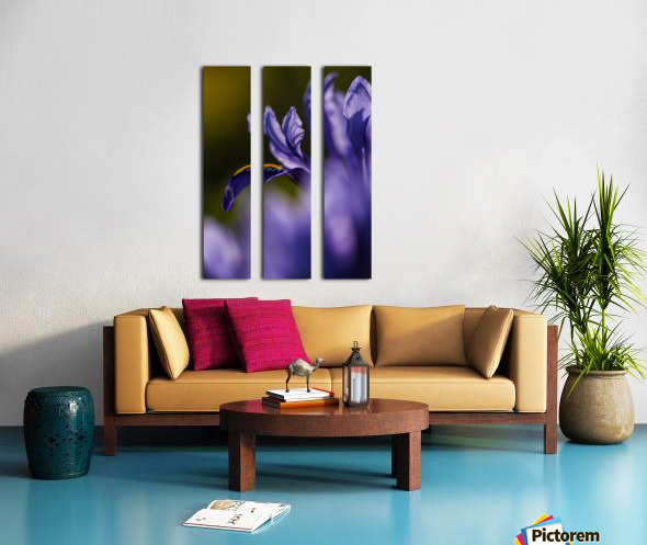 The dwarf Iris is one of the first flowers to bloom in the spring; Oregon, United States of America Split Canvas print