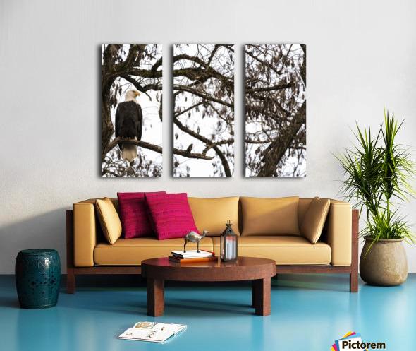 Bald Eagle (Haliaeetus leucocephalus) perched in a tree, Cowichan Bay; British Columbia, Canada Split Canvas print
