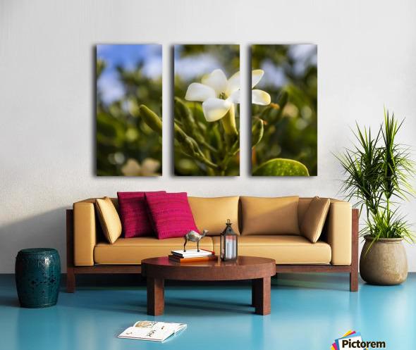 Close-up of puakenikeni flower; Lanai, Hawaii, United States of America Split Canvas print