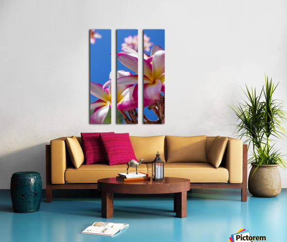 Close-up of pink plumeria flowers and blue sky; Lanai, Hawaii, United States of America Split Canvas print