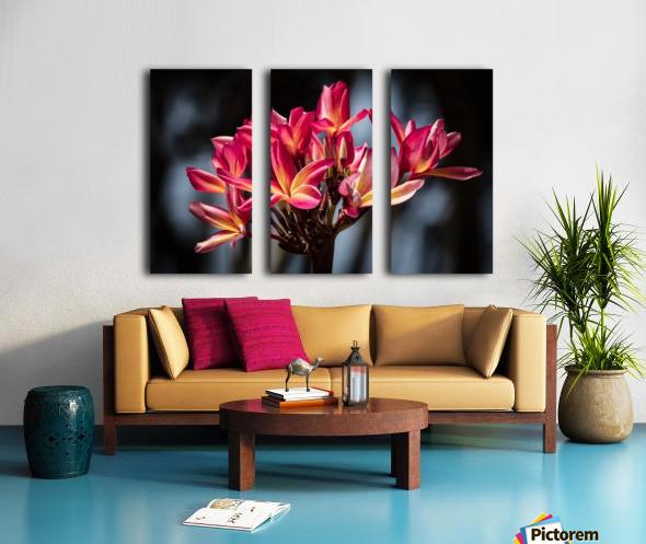 Close-up of bright pink plumeria flowers; Maui, Hawaii, United States of America Split Canvas print